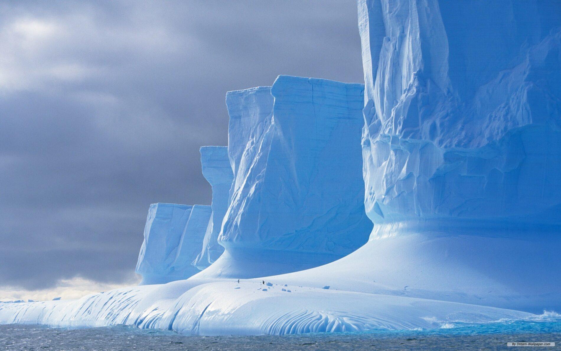 пингвины на глыбе льда  № 91286 бесплатно